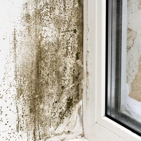Muffa sui muri: le cause