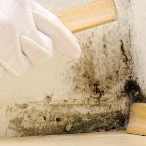Muffa sui muri: danni per la salute e rimedi
